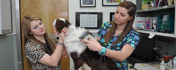 Blue Ridge Animal Clinic
